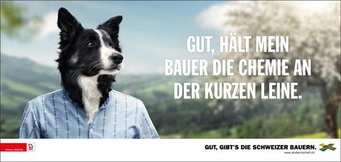 Hund_F12