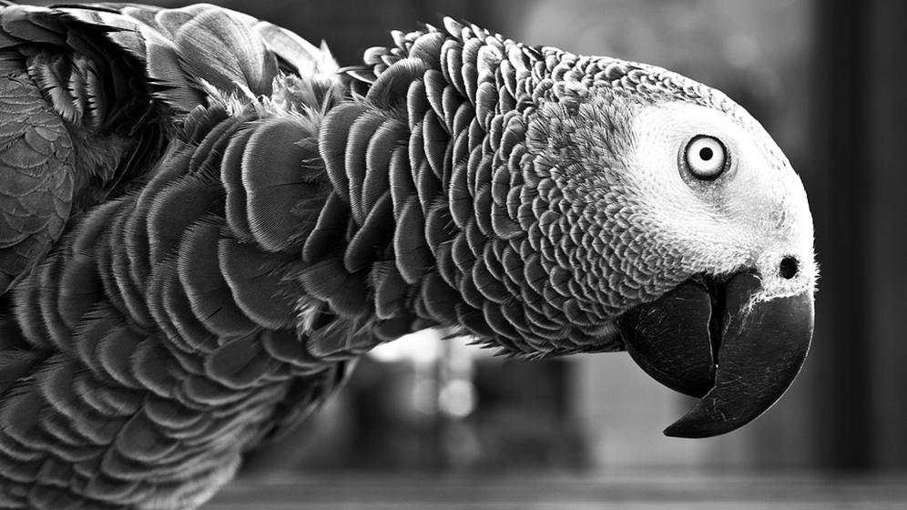 parrot-1246663_960_720